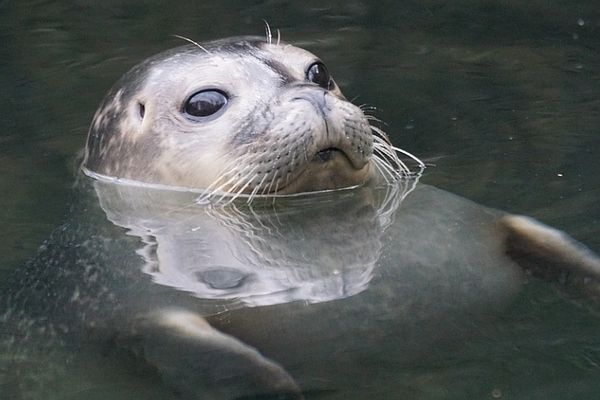 Mablethorpe Seal Sanctuary & Wildlife Centre